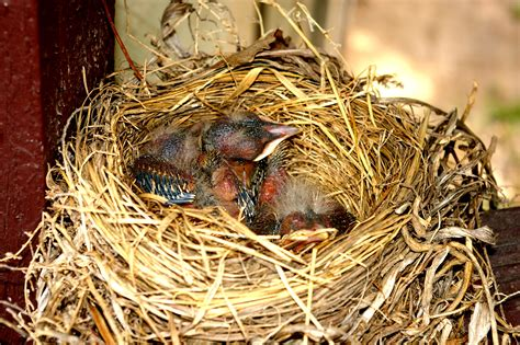 three baby birds mike s look at life