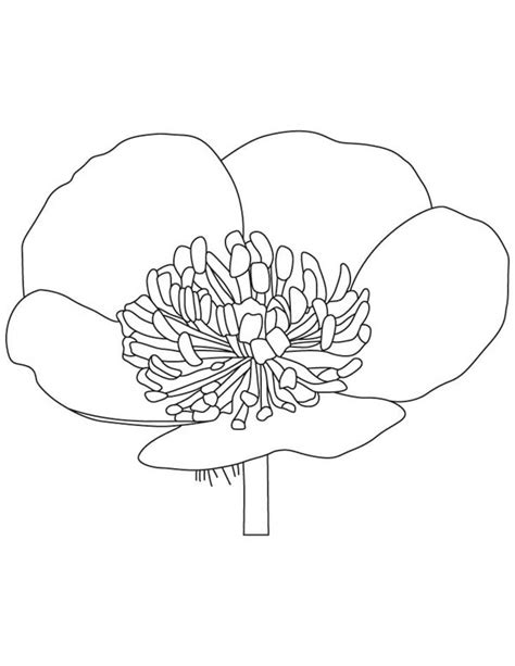 buttercup flower coloring page color luna
