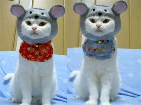 cat clothes cat clothes 22 pics picture 21 izismile