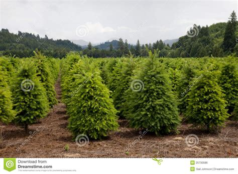 best 28 sells christmas tree farm christmas tree farm