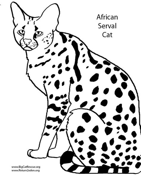 african cats coloring pages раскраски кошки poisk