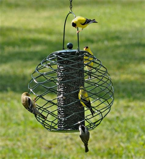 globe sunflower seed bird feeder bird squirrel feeders