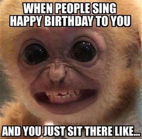 Happy Birthday Animal Meme - the happy birthday face