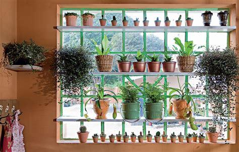 plantas dentro de casa casa e jardim galeria de fotos