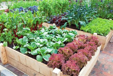 productive vegetable gardening tips  beginners