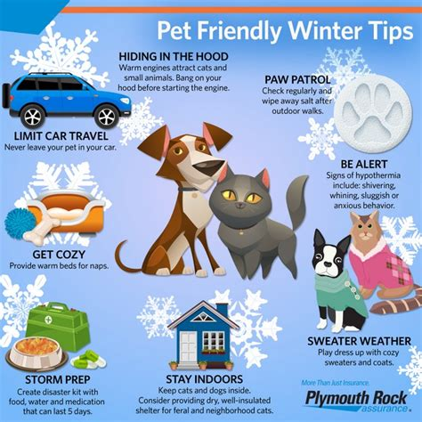 9 Tips On Keeping Your Outside Pet Safe From The Cold by How To Keep Your Pets Safe This Winter Rock Talk