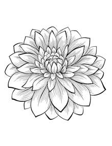 flower coloring pages for adults dahlia color one of the most beautiful flowers from the