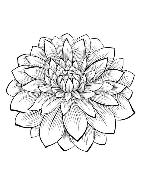 types of flowers coloring pages dahlia color one of the most beautiful flowers from the