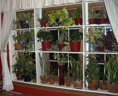 window plant shelves greenhouseindoor garden