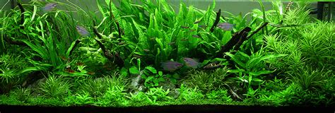 Aquascape Plants by The Jungle Style Aquarium Aquascaping