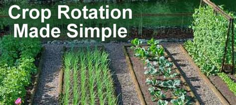 Vegetable Garden Crop Rotation Vegetable Garden Crop Rotation Software Garden Ftempo