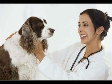 how to tell if puppy is sick 5 signs to tell if a is sick boldsky