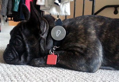 whistle tracker review whistle review activity trackers go to the dogs pcworld