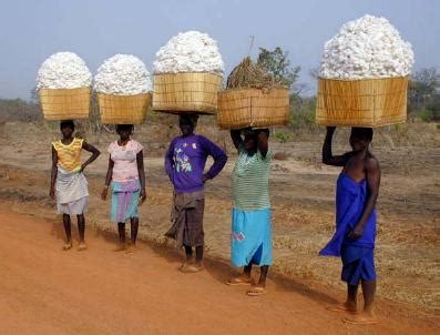 the retreat from monsanto bt cotton in burkina faso | ejatlas