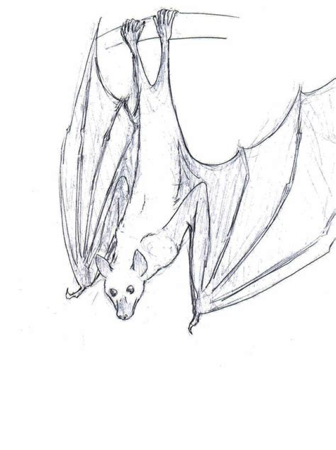 drawings of fruit bats cliparts co
