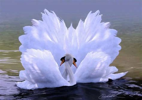beautiful images of love swan love beautiful pictures photo 34674027