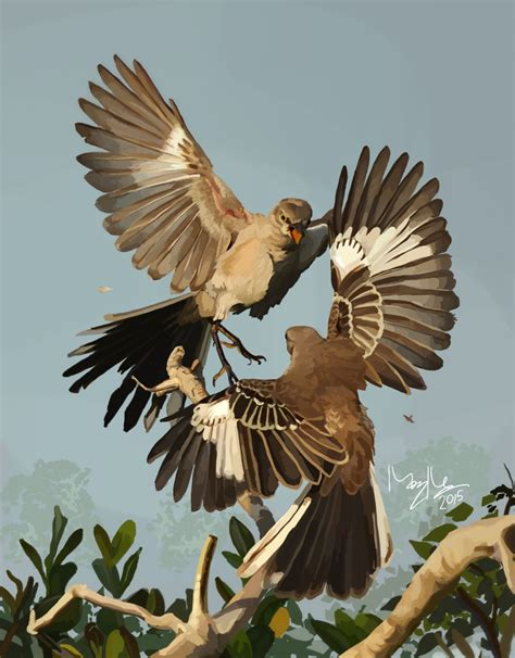 northern mockingbird mimus polyglottos mockingbirds