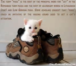 cat facts 5
