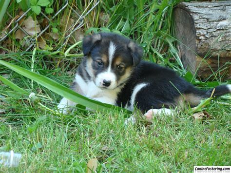puppies that don t grow muddy puppies will grow into dogs caninefostering