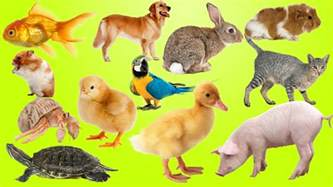 animal pictures for toddlers top best animals for and families pets for