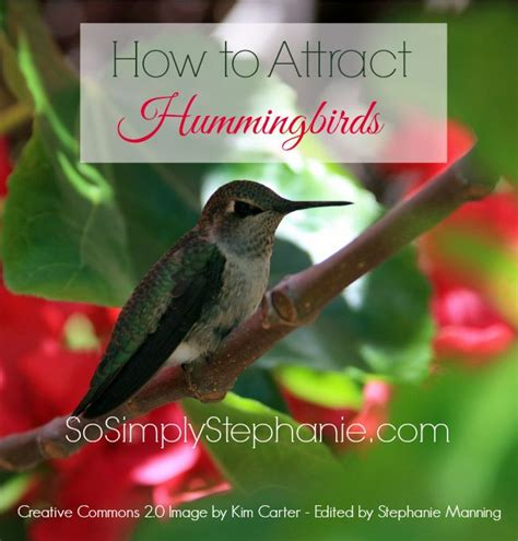 the perfect hummingbird food recipe hummingbird and
