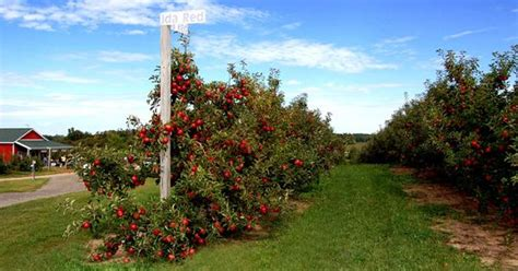 u fruit michigan crane orchards the best michigan u fruit our