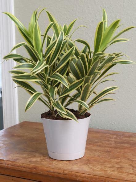 low light bathroom plants best 25 bathroom plants ideas on pinterest plants in