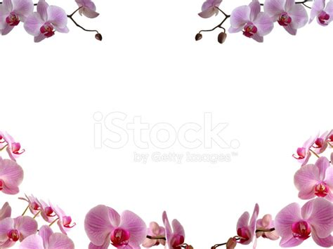 orchideen gestell orchids frame border stock photos freeimages