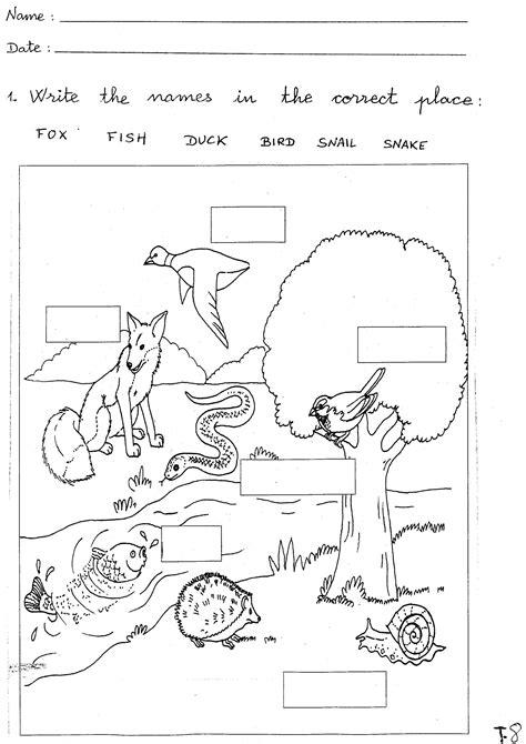 Free Science Worksheets by Free Science Worksheets Activity Shelter