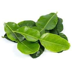 kaffir lime leaves from your authentic thai supermarket