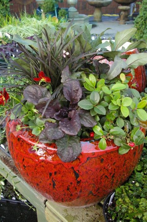 8 tips for fall and winter container gardening best 25 winter container gardening ideas on pinterest