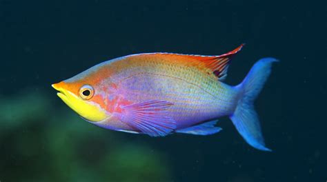 google images fish 301 moved permanently
