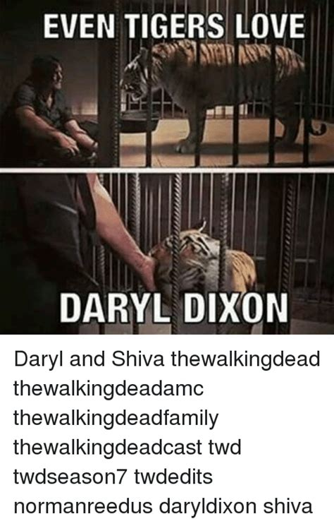 Shiva Meme - even tigers love daryl dixon daryl and shiva