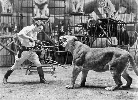 Animal Shower Curtain Lion Tamer 1930s Photograph By Granger