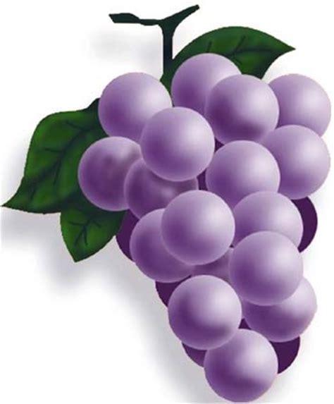imagenes de uvas en dibujo dibujos alimentos fotos imagenes fotos de uvas