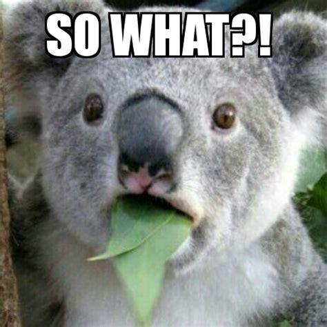 Koala Meme - koala crikey