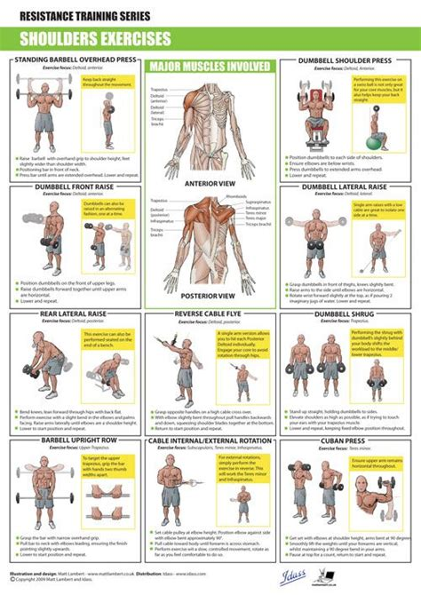 Shoulder Workout At Home by Shoulders Exercises Stuff Exercise And