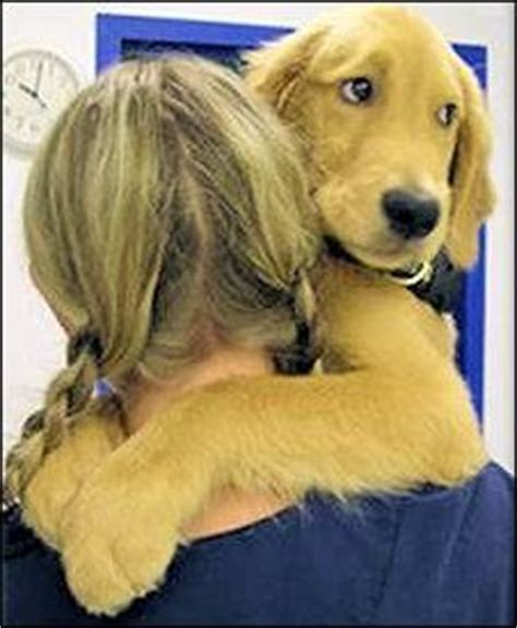 golden beginnings golden retriever rescue 1000 ideas about best hug on a hug types of hugs and