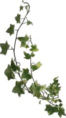 Tree Branch Decorations In The Home image ho romanycamp ivy icon png hidden chronicles