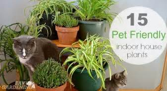 What To Put In A Raised Garden Bed For Soil - pet friendly house plants 15 indoor plants that are safe for cats and dogs