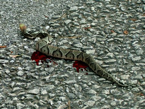 Creepy Search Scary Snakes Images Search