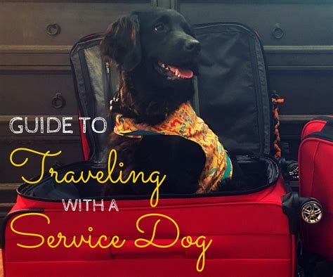 flying with a service guide to traveling with a service free wheelin