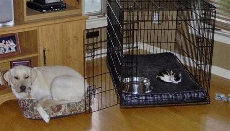 cats stealing dog beds itt cats stealing dog beds ign boards