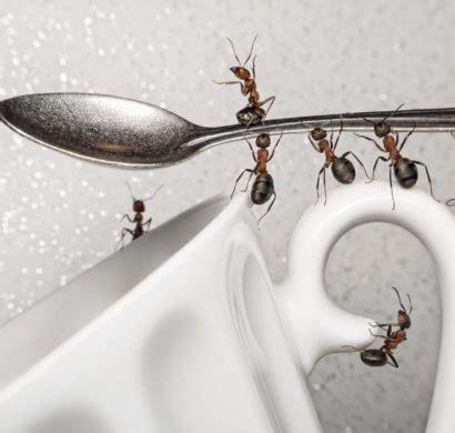 Hausmittel Gegen Ameisen Auf Der Terrasse 4450 by 15 Hausmittel Gegen Ameisen So Vertreiben Sie Die Kleinen