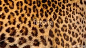 Jaguar Skin Quot Real Jaguar Skin Quot Stock Photo And Royalty Free Images On