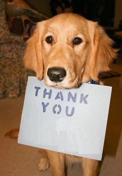 thank you puppy top 10 images of dogs saying thank you