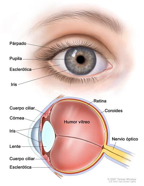 imagenes de ojos infectados el ojo y sus principales partes blog clof 225 n