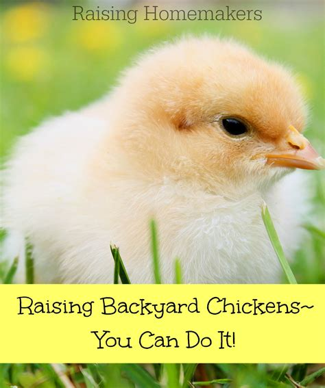 Can I Raise Chickens In Backyard by Raising Backyard Chickens You Can Do It Raising Homemakers