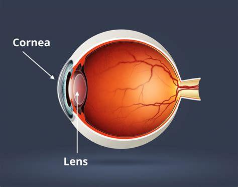 eye lens eye lens anatomy human anatomy diagram