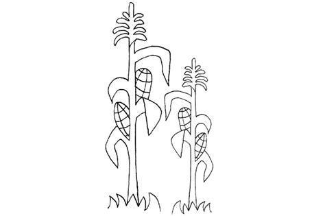 Corn Stalk Coloring Page Corn Stalk Coloring Page